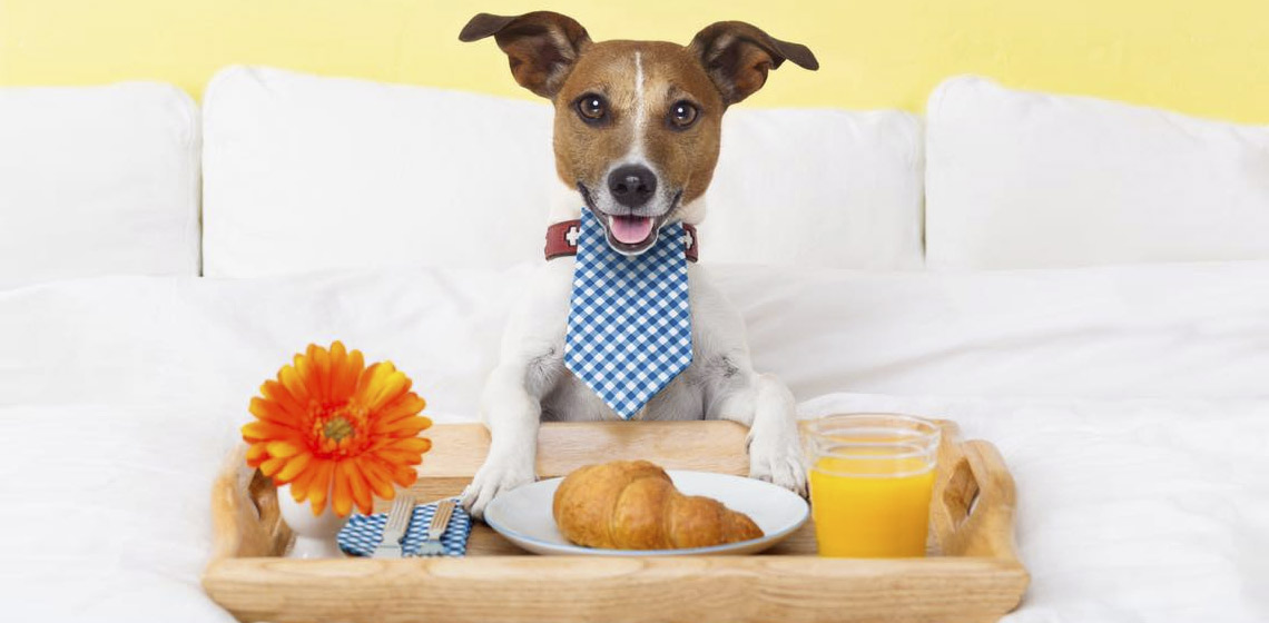 hoteis que aceitam cachorro em gramado
